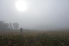 Varje dag har inte varit solsken. Dimma kan även te sig vackert.