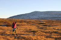 Höstvandring i kvällssolen. Sonfjällets nationalpark.